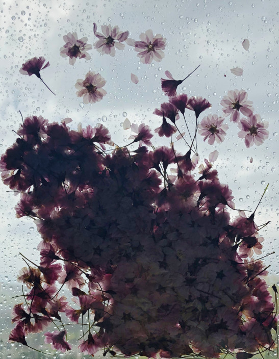 Kristen Cooney, The Blossom Mandala, 2020. Assorted species of pressed plants attached to window panes. Series of 10 digital photographs.