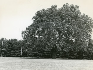 Did you know that Ursinus had a large sycamore tree in the end zone of our football field? What b...