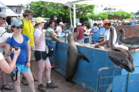 Grant Cooper ('14), Sara Obeiter ('14), Ryan Keihart ('14), and Thea Dougherty ('14) congregate at the open fish market in Puerto Ayora, Isla Santa Cruz, Galápagos, during a break in BIO-350 (Evolution in the Galápagos). All species are welcome at the market!