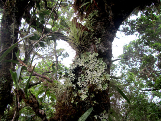 The stunted trees of the Elven Forest are coated with lichen and epiphytes.