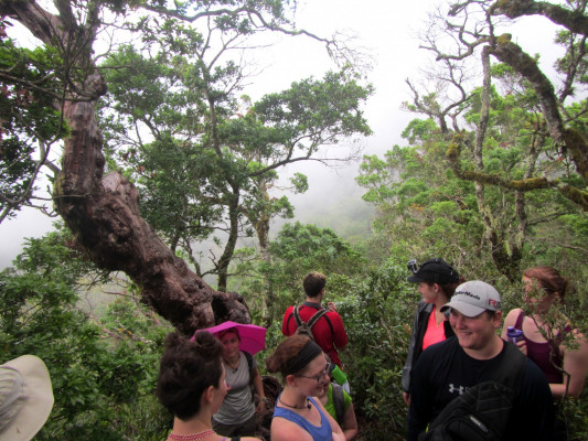 At first, the view from the ridge was shrouded in mist, as befits a cloud forest…