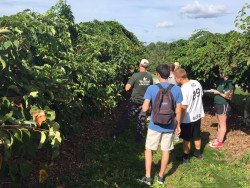 Capstone students learn about kiwi berries at Weaver's Orchard.