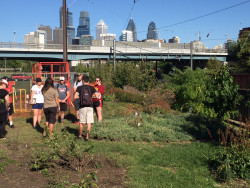 Capstone students meet with Robyn Mello of Philadelphia Orchard Project to tour the Penn Park food forest.