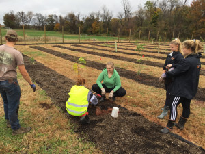 Sustainability in the Suburbs students demonstrate proper tree planting techniques at the Food Fo...