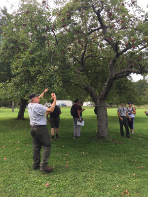 Hopewell Furnace staff discuss challenges of managing heirloom orchard.