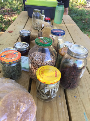 Diverse products harvested from the homestead.