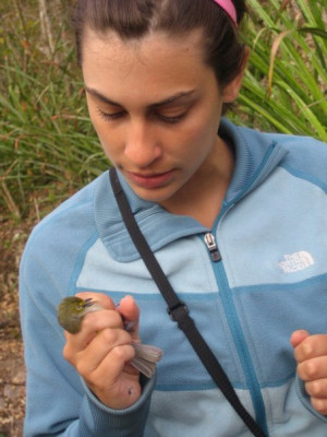 Regan Dohm holding a recently mist-netted white-eyed vireo (Yucatan Peninsula, Mexico)