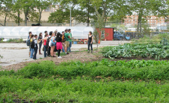 Touring the farm fields of Added Value urban farm in Brooklyn, NY.