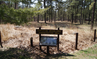 Visiting Nottingham County Park and the globally rare serpentine pine barrens of southeastern Pennsylvania and northwestern Maryland.