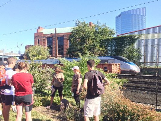 Passengers on Amtrak's NE corridor get a view of a forest garden.