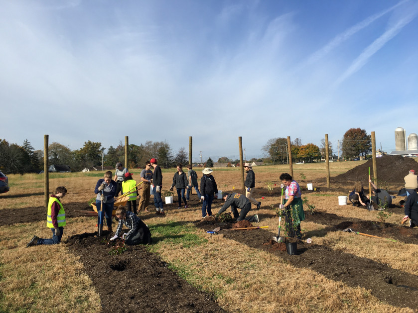 Ursinus students plant the first phase of the food forest, October 26, 2020.