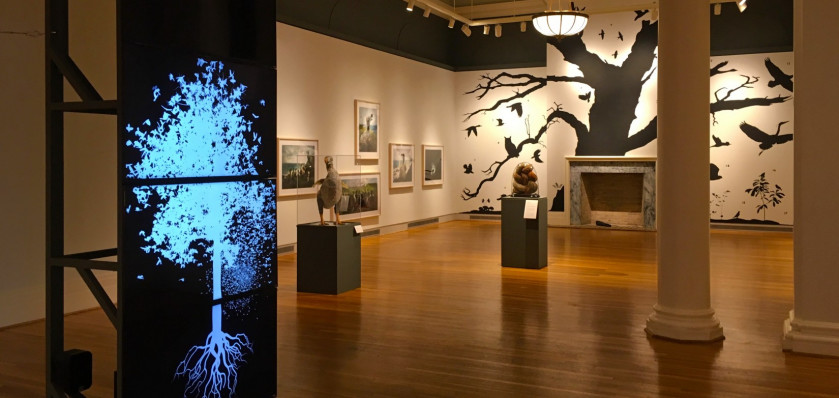 Installation view, Rare Bird: John James Audubon and Contemporary Art, Berman Museum of Art. This...