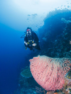 Emily McGrath with a giant barrel sponge at Hoga Island in the Wakatobi National Marine Park in Indonesia.
