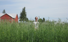 Denise Finney samples biomass in a cereal rye cover crop.