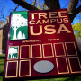 "Ursinus is ""Tree Campus USA"""