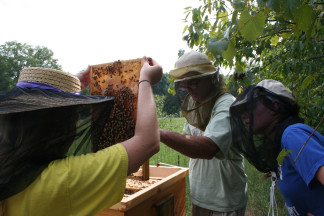 Harvesting honey at the Organic Farm