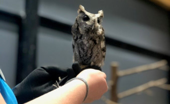 Elmwood park zoo staff spoke with the Ursinus community about screech owls and their habitat of forested areas, resid...