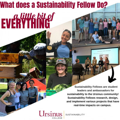 Sustainability Fellows do a little bit of everything!