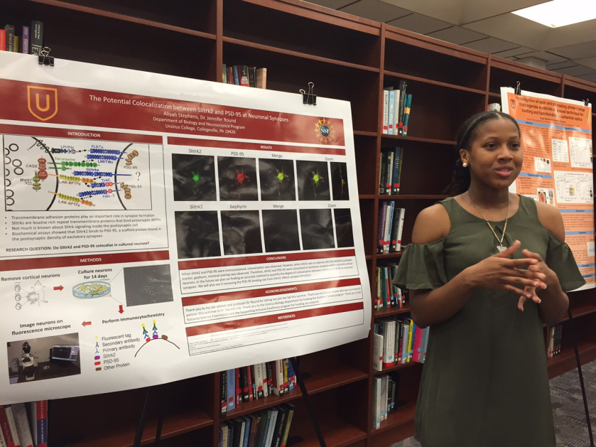 Aliyah Stephens's Research The Potential Colocalization of Slitrk2 and PSD-95 at Neuronal Synapse...
